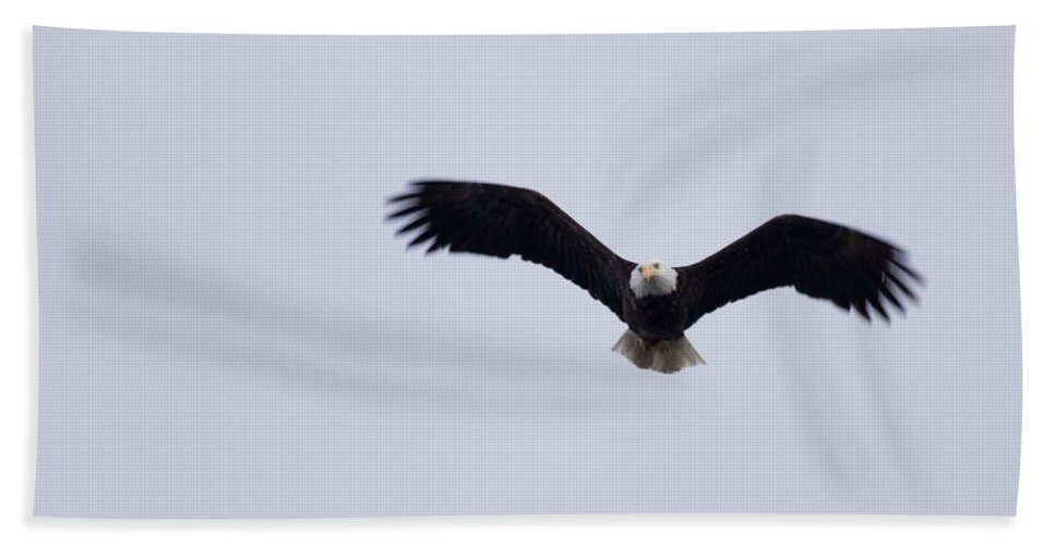 Bald Eagle Hand Towel featuring the photograph Flying Through by Karen Ulvestad