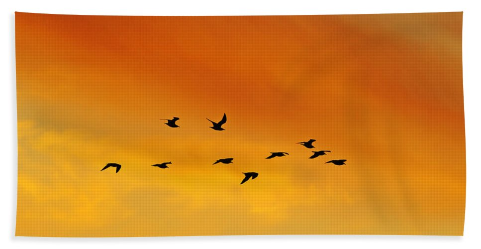Ring-billed Gull Hand Towel featuring the photograph Flying To The Roost by Tony Beck