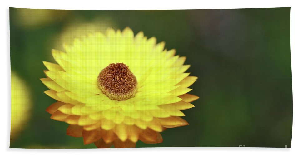 Flower Hand Towel featuring the photograph Focal Point by Stephen Mitchell