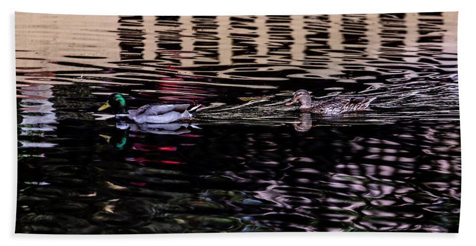 Duck Hand Towel featuring the photograph Follow Me by Edgar Laureano