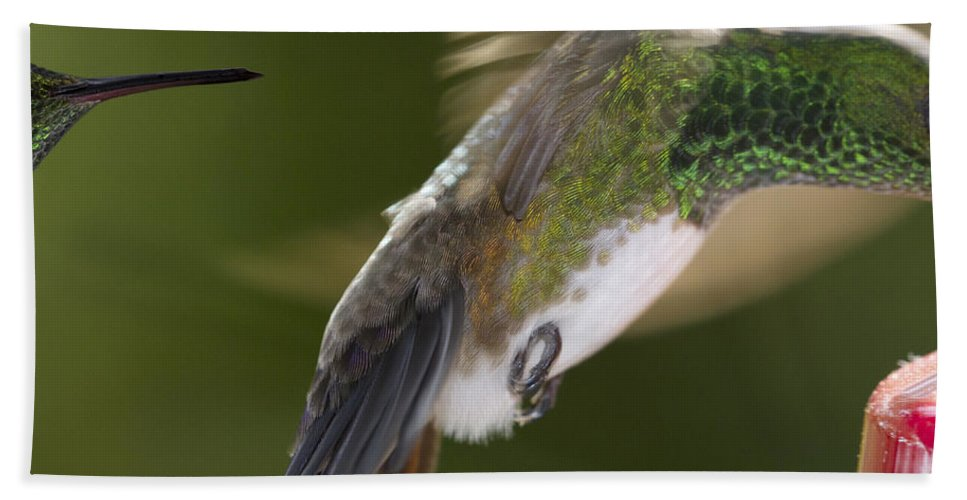 Hummingbird Hand Towel featuring the photograph Follow-up by Heiko Koehrer-Wagner