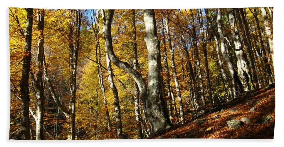 Fall Colors Hand Towel featuring the photograph Forest Fall Colors 4 by Alina Cristina Frent