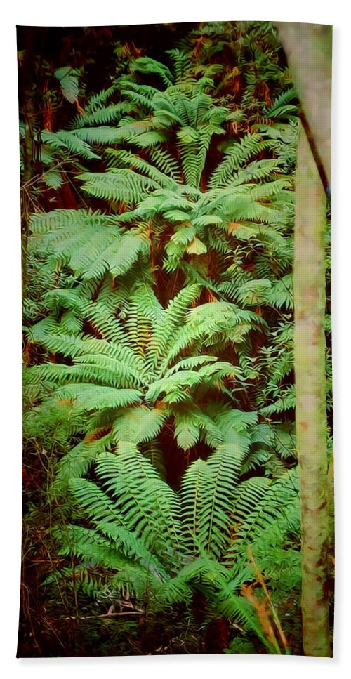 Ferns Bath Sheet featuring the photograph Forest Of Ferns by Douglas Barnard