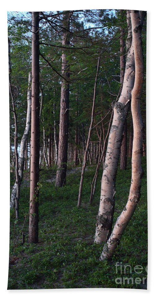 National Park Hand Towel featuring the photograph Forest, Shore Of Lake Superior by Ted Kinsman