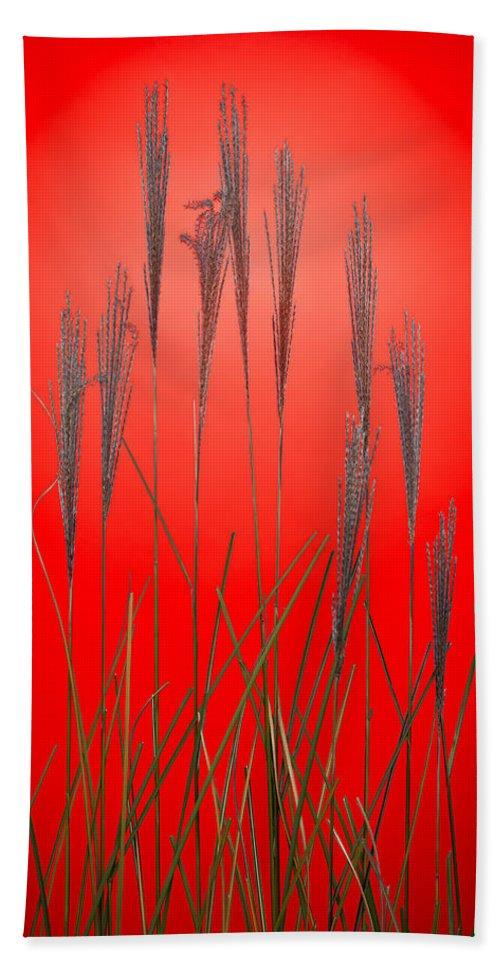 Grass Bath Sheet featuring the photograph Fountain Grass In Red by Steve Gadomski