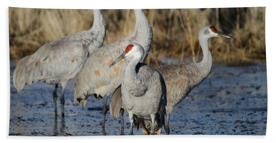 Bird Hand Towel featuring the photograph Four Sandhill Cranes by Sabrina L Ryan