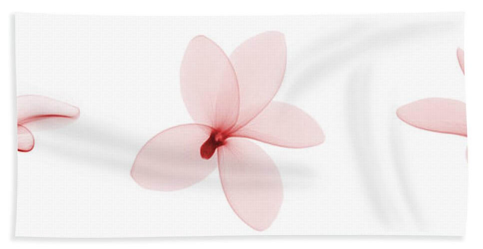 Nature Hand Towel featuring the photograph Fragipani Plumeria Flowers, X-ray by Ted Kinsman