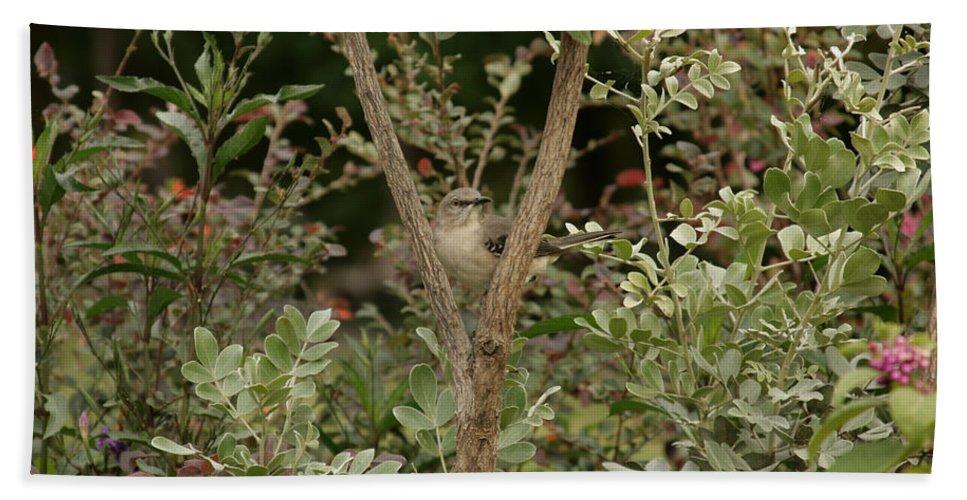 Framed Grey Bird Bath Sheet featuring the photograph Framed V2 by Douglas Barnard