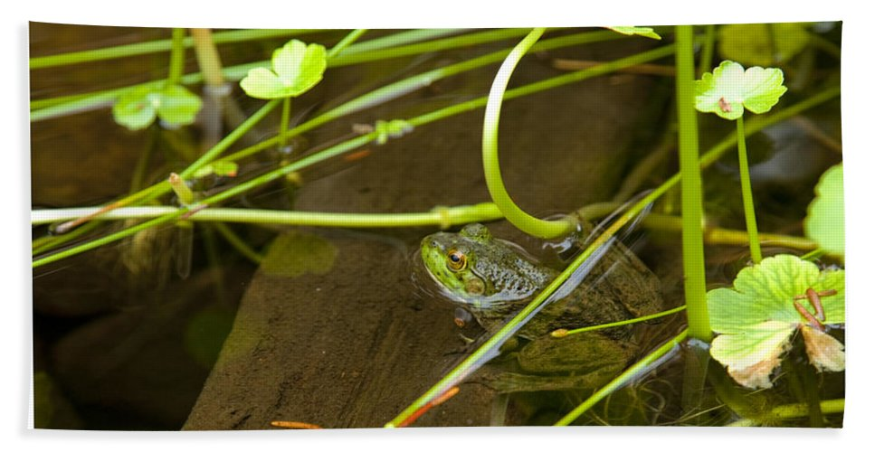 Frog Bath Sheet featuring the photograph Freddy by John Stephens