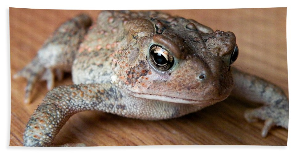 Frog Bath Sheet featuring the photograph Freddy by Trish Tritz