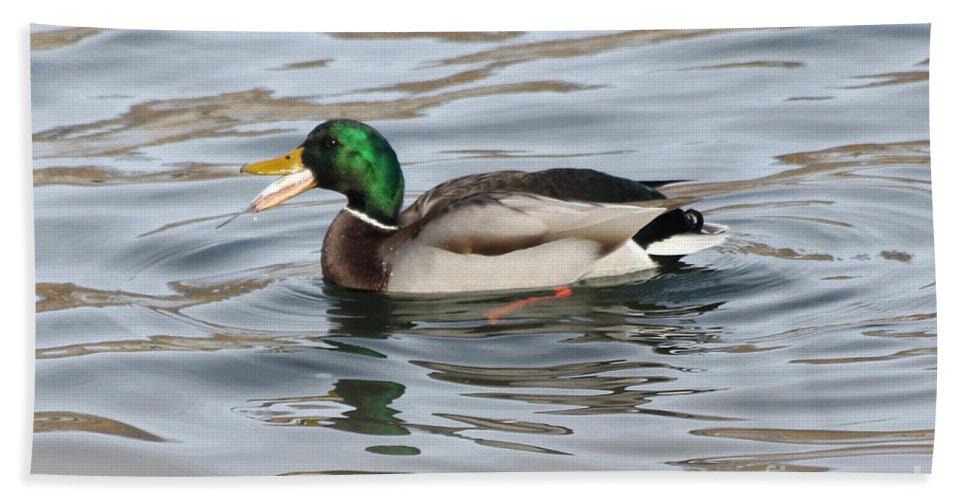 Mallard Ducks Bath Sheet featuring the photograph Fresh Catch Going Down by Lori Tordsen