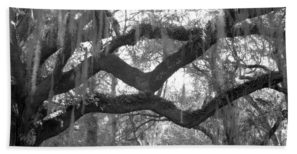 Tree Hand Towel featuring the photograph Fringe by Jean Macaluso