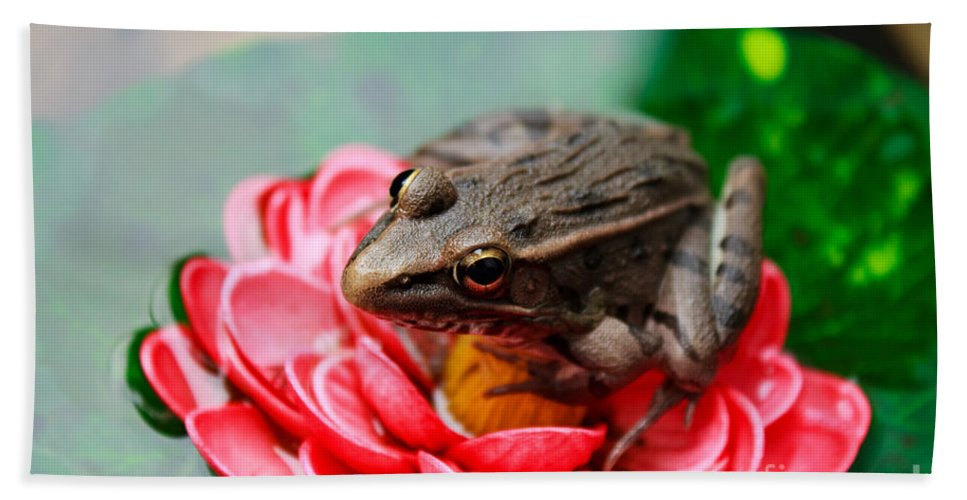 Amphibian Hand Towel featuring the photograph Frog On Lily Pad Two by Ms Judi