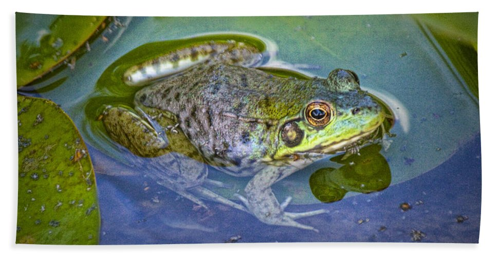 Art Bath Sheet featuring the photograph Frog Resting On A Lily Pad by Randall Nyhof