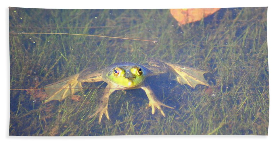 Frog Bath Sheet featuring the photograph Froggie Sitting In The Water by Laurel Talabere