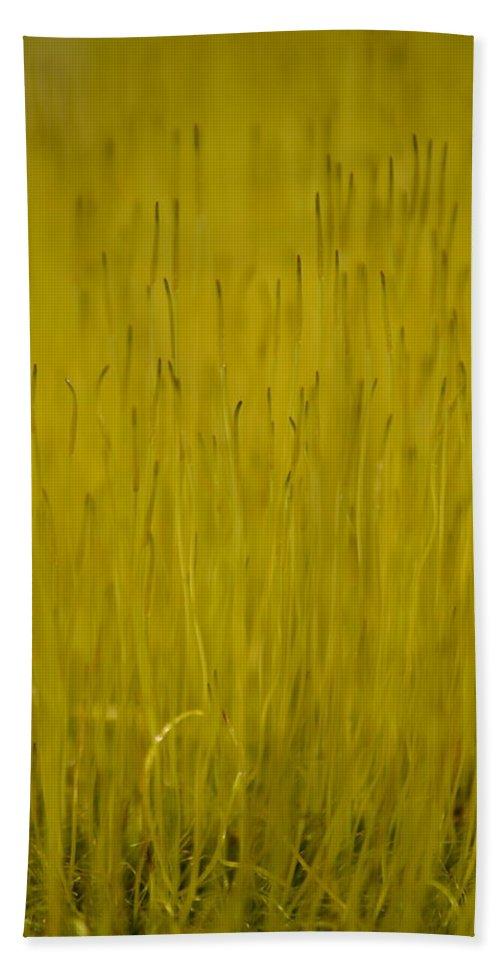 J.d. Grimes Bath Sheet featuring the photograph Fruiting Moss by JD Grimes