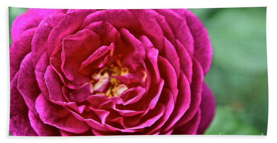 Garden Bath Sheet featuring the photograph Full Bloom by Susan Herber