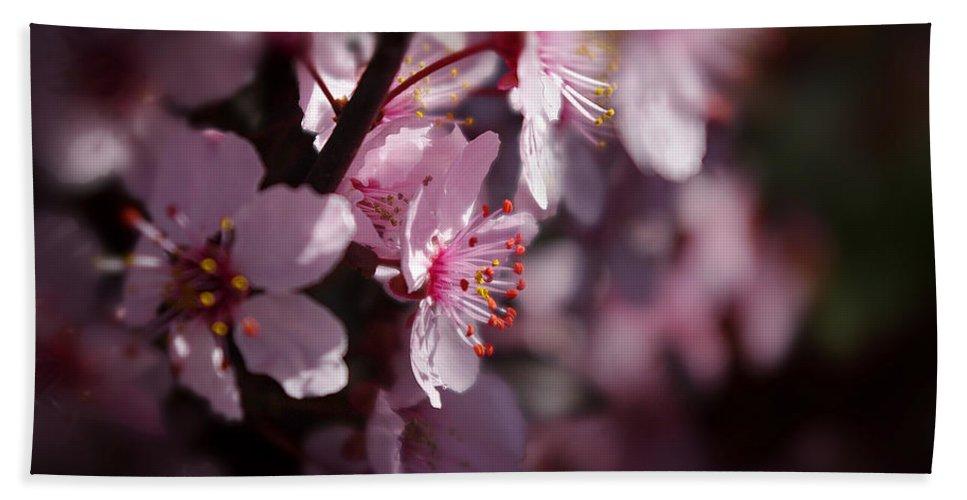 Photograph Bath Sheet featuring the photograph Full Bloom by Vicki Pelham