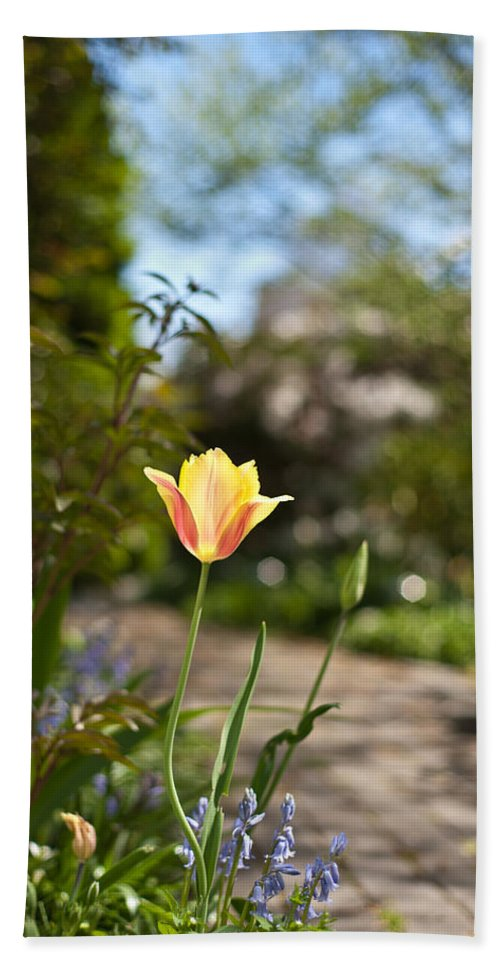 Tulip Bath Sheet featuring the photograph Garden Radiance by Mike Reid