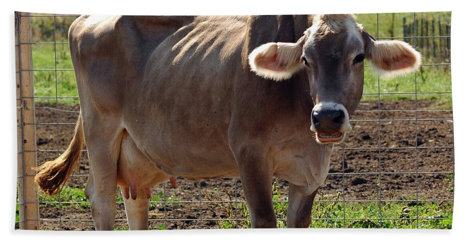 United_states Bath Sheet featuring the photograph Gasping Cow by LeeAnn McLaneGoetz McLaneGoetzStudioLLCcom