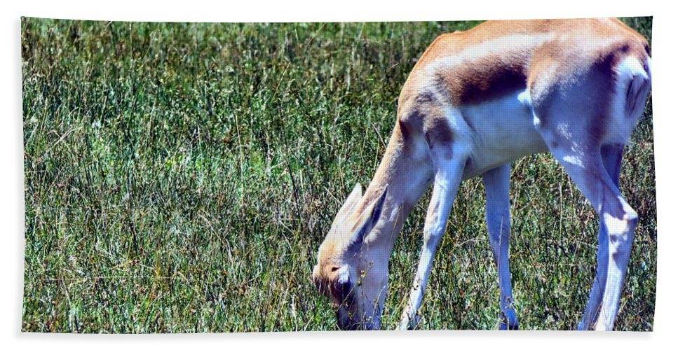 Zoo Bath Sheet featuring the photograph Gazelle by Art Dingo