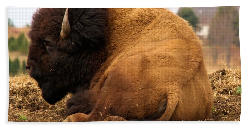 Bison Hand Towel featuring the photograph Gentle Giant by Adam Jewell