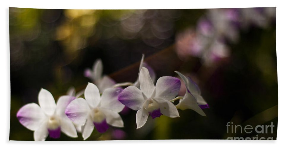 Tropical Bath Sheet featuring the photograph Gentle Light by Mike Reid