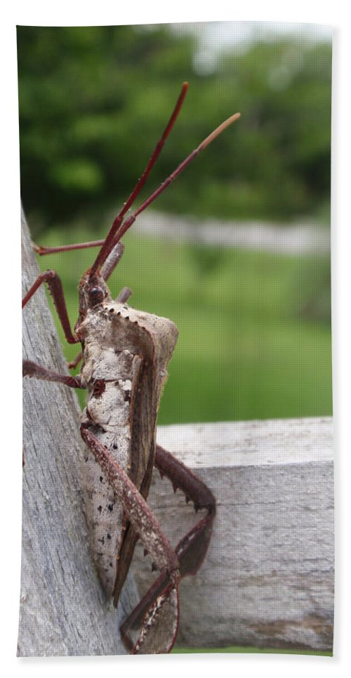 Assassin Hand Towel featuring the photograph Giant Assassin Bug by Kathy Clark