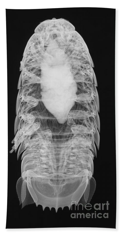 Xray Hand Towel featuring the photograph Giant Isopod, X-ray by Ted Kinsman