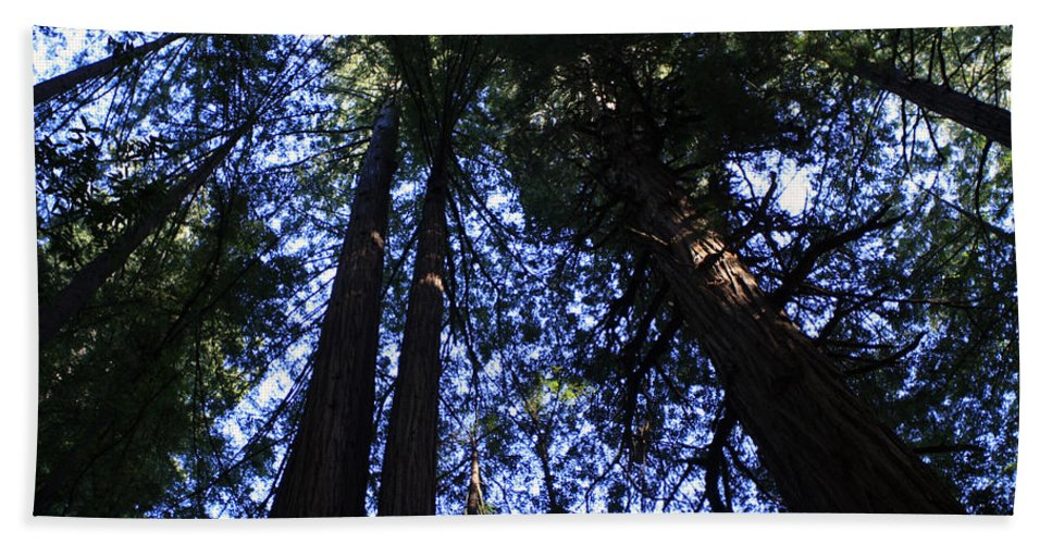 Giant Redwoods Hand Towel featuring the photograph Giant Redwoods, Muir Woods, California by Aidan Moran