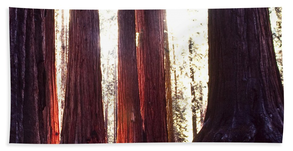 California Bath Sheet featuring the photograph Giant Sequoia by Stephen Whalen
