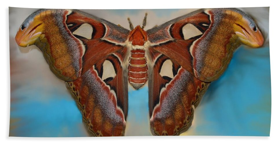 Antenna Hand Towel featuring the photograph Giant Silk Moth by William Bartholomew