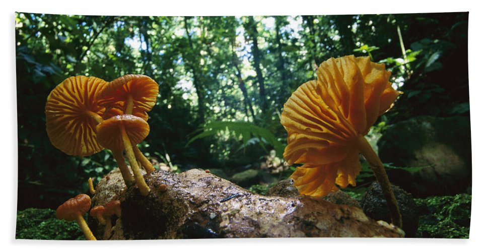 Mp Hand Towel featuring the photograph Gill Mushroom Xeromphalina Sp Group by Christian Ziegler