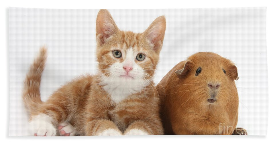 Nature Hand Towel featuring the photograph Ginger Kitten With Red Guinea Pig by Mark Taylor