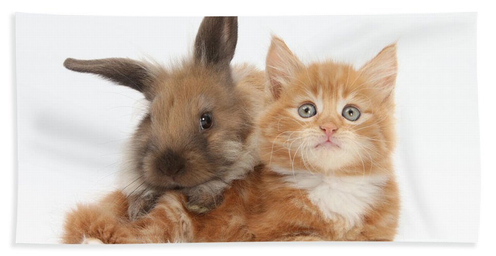Nature Hand Towel featuring the photograph Ginger Kitten Young Lionhead-lop Rabbit by Mark Taylor