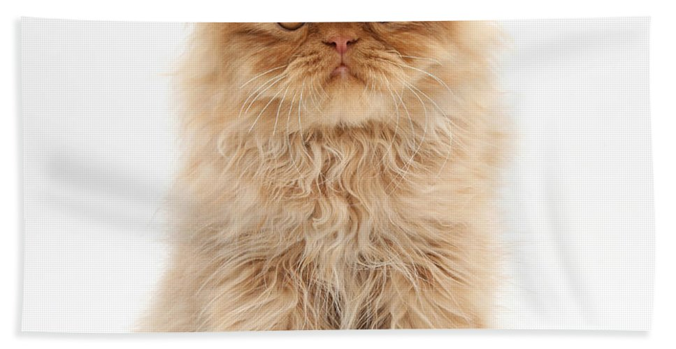 Animal Hand Towel featuring the photograph Ginger Persian Kitten by Mark Taylor
