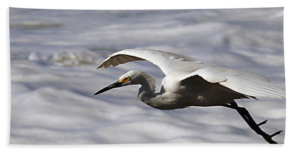 Egret Hand Towel featuring the photograph Gliding Snowy Egret by Joe Schofield