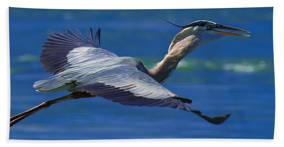 Great Blue Heron Hand Towel featuring the photograph Gliding Great Blue Heron by Sebastian Musial