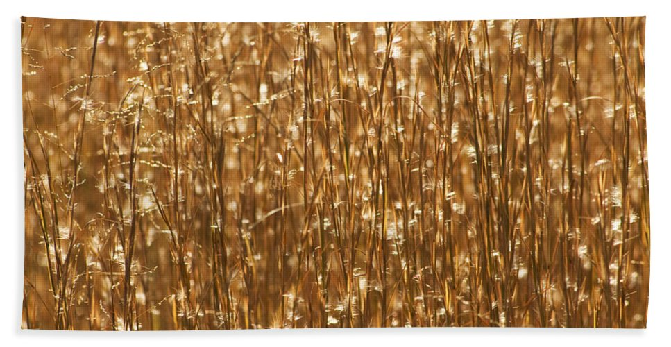 Gold Hand Towel featuring the photograph Glistening Gold Prairie Grass Abstract by Kathy Clark