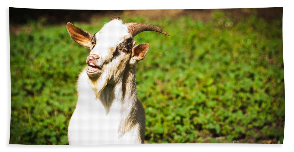 Goat Hand Towel featuring the photograph Goat Smiles by Cheryl Baxter