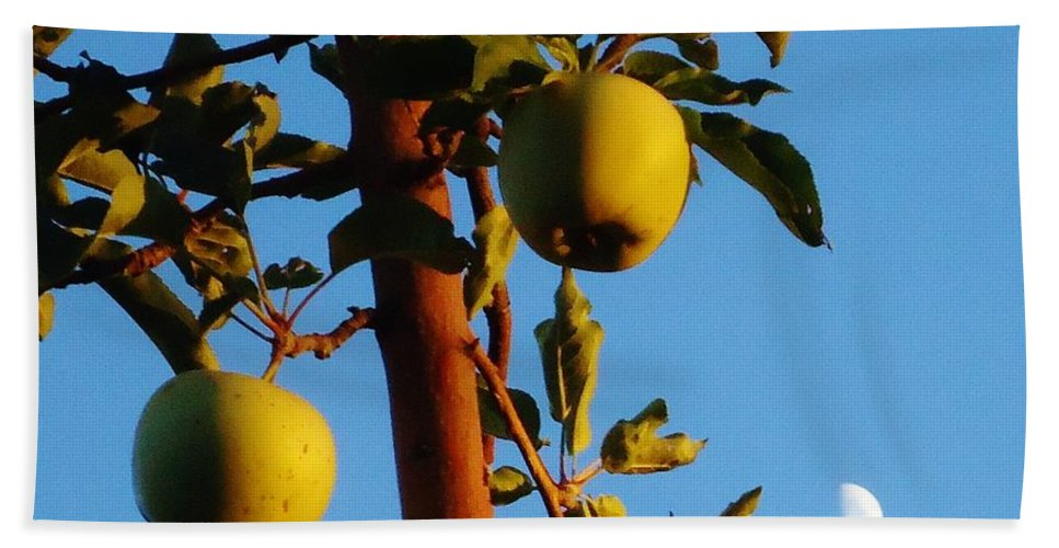 Tree Bath Sheet featuring the photograph Golden Apples by Lois  Rivera