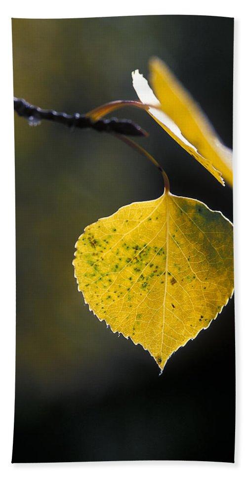 Golden Aspen Leaf.golden Hand Towel featuring the photograph Golden Aspen Leaf by Gary Langley