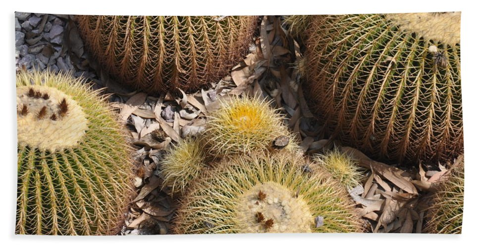 California Hand Towel featuring the photograph Golden Barrel Cactus 3 by Rich Bodane