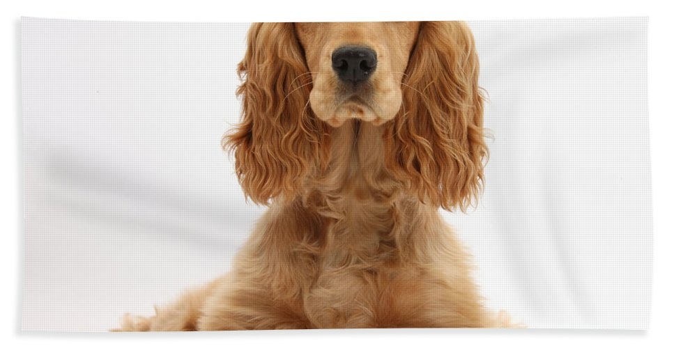 Animal Hand Towel featuring the photograph Golden Cocker Spaniel by Mark Taylor