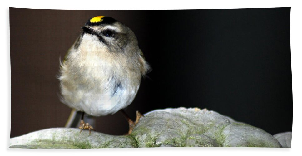 Golden-crowned Kinglet Hand Towel featuring the photograph Golden-crowned Kinglet by Optical Playground By MP Ray