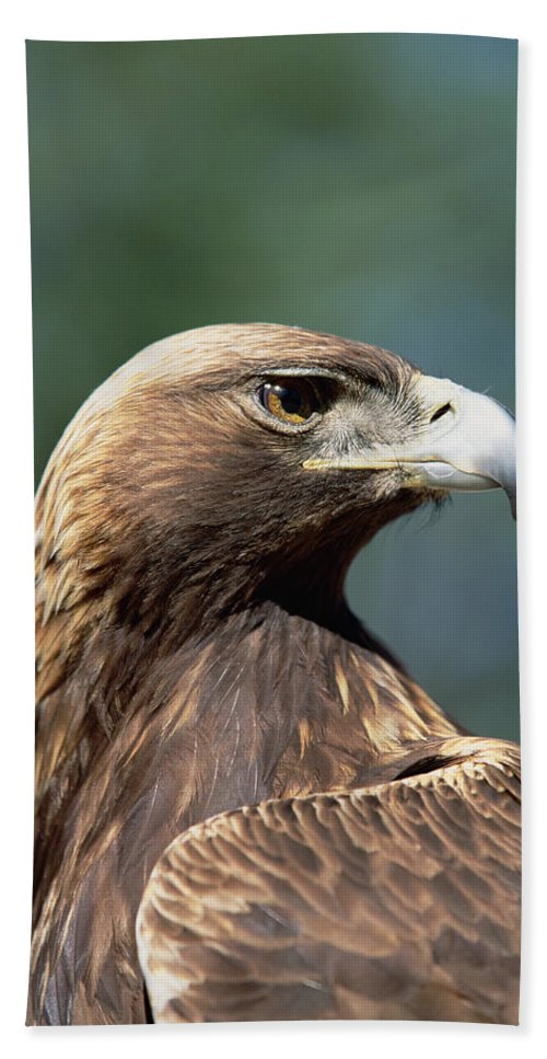 Animal Hand Towel featuring the photograph Golden Eagle In Profile by Konrad Wothe