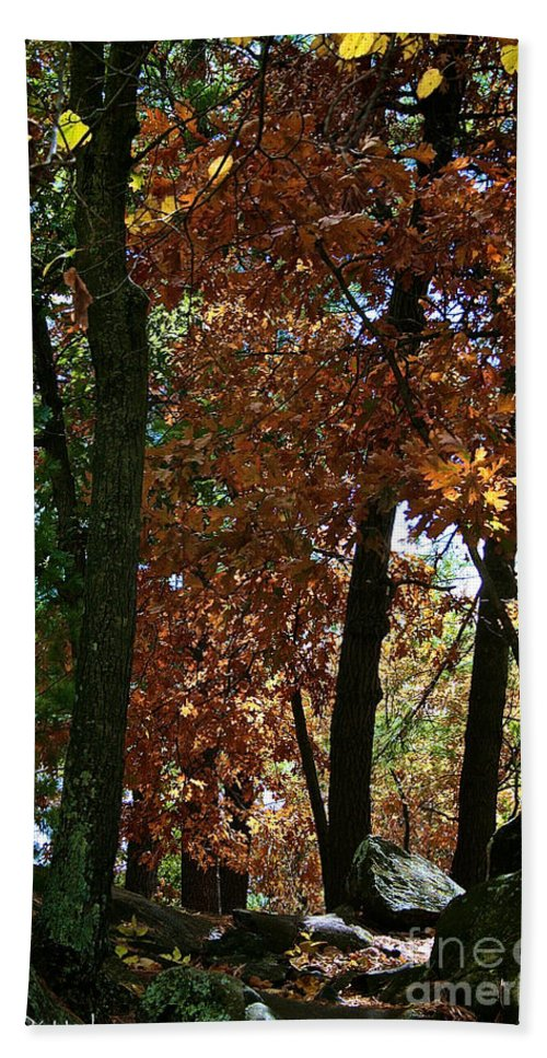 Landscape Hand Towel featuring the photograph Golden Oak by Susan Herber