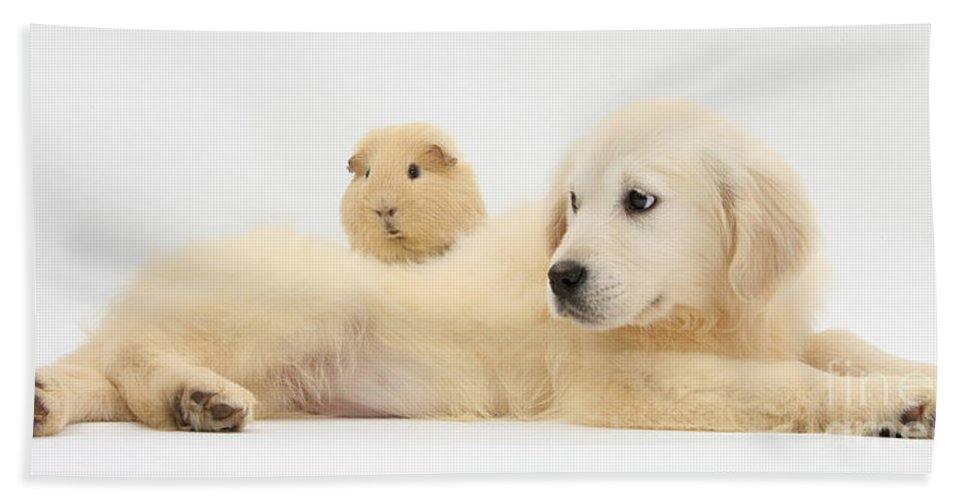 Nature Hand Towel featuring the photograph Golden Retriever Pup And Guinea Pig by Mark Taylor