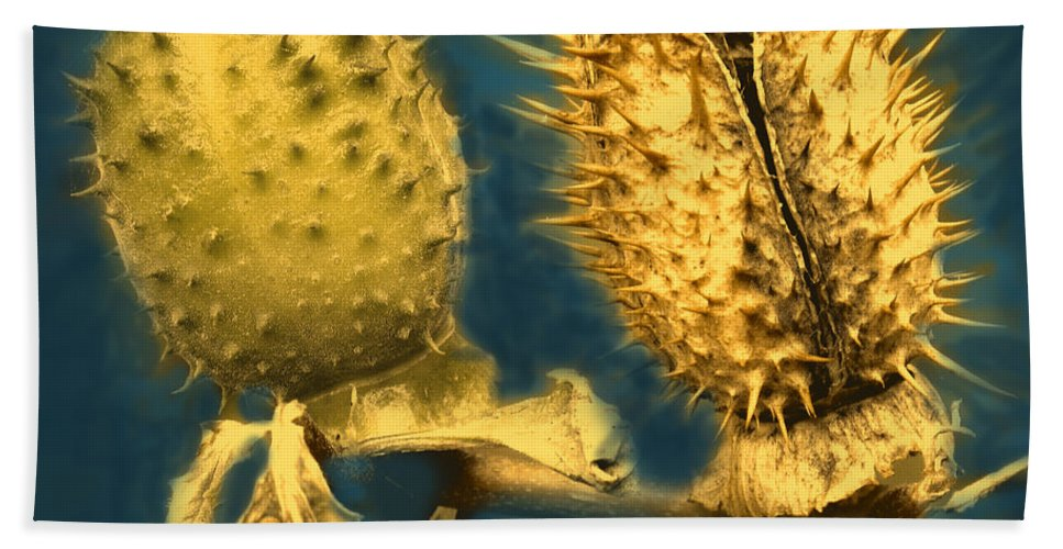 Gold Bath Sheet featuring the photograph Golden Thistle by Iatn MacDonald