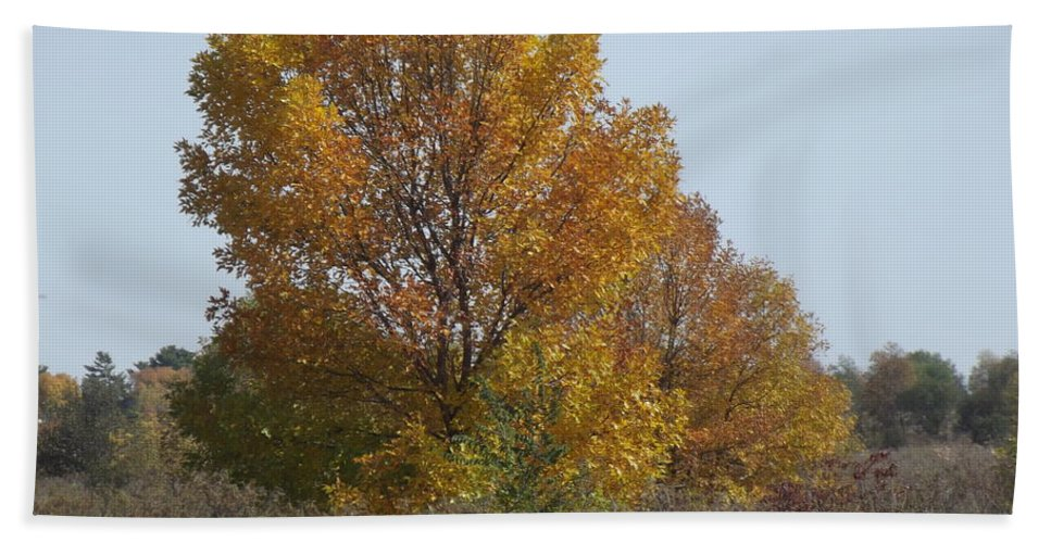 Blue Hand Towel featuring the photograph Golden Tree II by Bonfire Photography